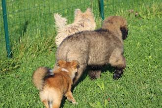 Photo: Cool, un petit nouveau de 5 mois, ils sont tous plus petit que moi
