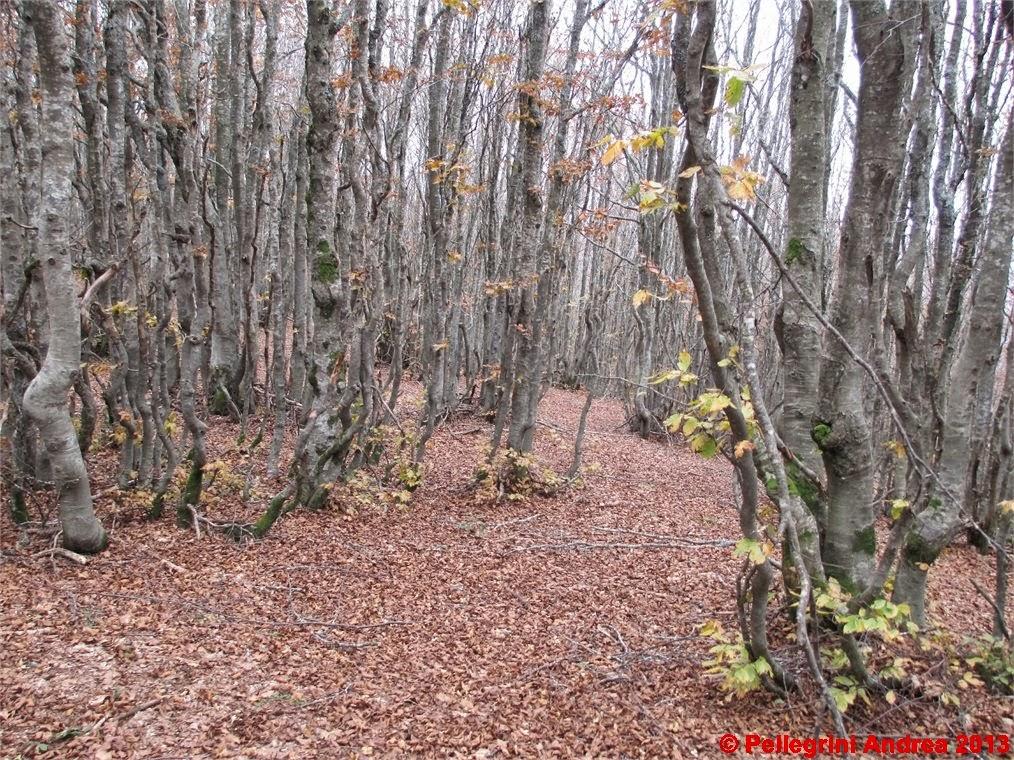 Photo: IMG_4127 nel bosco verso il Passo Forbici
