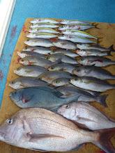 """Photo: 釣果です。 まずは""""佐賀のイノウエさん""""! 良型の真鯛が入りました!"""