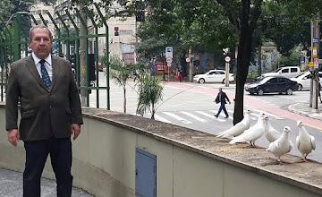 Photo: Uma barbaridade. Alguém soltou estes pombos indefesos. Eles estão na área externa da Câmara Municipal de São Paulo. Como possuem placa de identificação na pata, o biólogo Antonio Miranda, do Projeto Gaiola Aberta, me explicou via fone que a soltura foi crime ambiental, pois possivelmente são aves capturadas e adestradas. Parece que não são do Brasil. As pessoas colocaram comida, mas os pombos são presas fáceis para os gatos. Ontem eram uns 20 e hoje só vi estes. Deveriam ter sido levados ao IBAMA. São dóceis e deixam chegar muito perto, o que é perigoso. Irresponsável quem fez isto. 01 12 2015