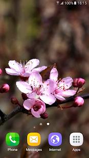 Springtime Live Wallpaper - náhled