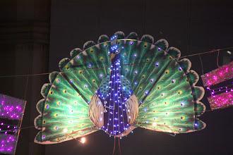 Photo: Year 2 Day 135 -  Beautiful Peacock Light