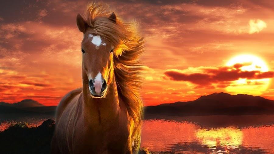 The HORSE by Arkendu Pal - Animals Horses