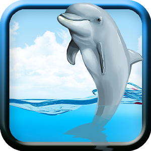 Racing Dolphin Show