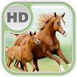 Horse Wallp.. file APK for Gaming PC/PS3/PS4 Smart TV