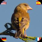 Birds of Europe (DE EN ES FR) 1.4.1