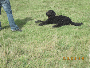 Photo: Ralph Labradoodle in Best Trick