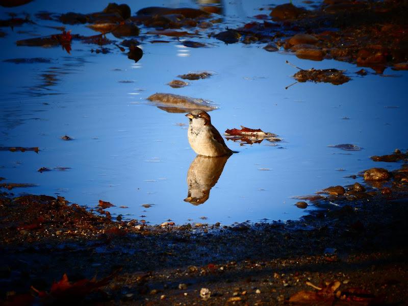 lo specchio d'acqua di pablo55