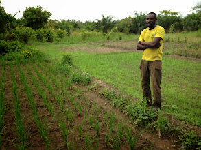 Photo: A colleague of Kokou Joseph Adokanou's in Joseph's SRI demonstration plots near Kovie. Photo by Devon Jenkins, Togo, March, 2014.