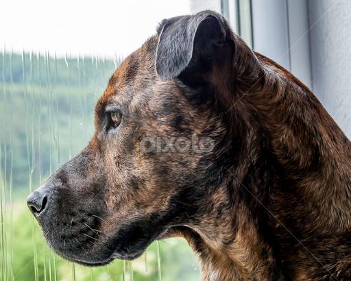 Rainy Day Blues Portraits Animals Dogs Pixoto