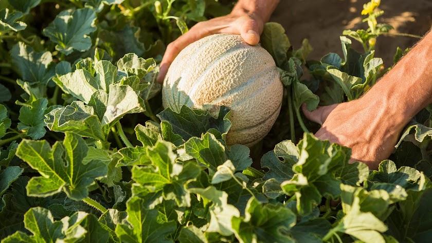 Basf gestionará en torno a 1.600 variedades hortícolas