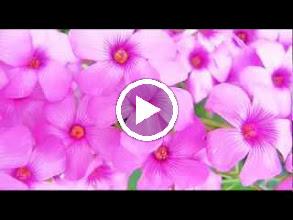 Video: A. Vivaldi  Concerto for bassoon, strings   b.c. in C major (RV 475) -
