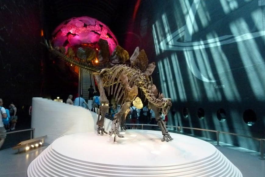 Stegosaurus - Natural History Museum