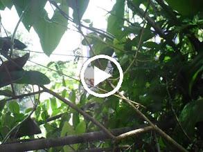 Video: 13/ SAM_0167 Một Nhân Chứng Cho Tôi Biết Đất Bên Đây Của Tôi Là Đất Của Ông Năm Lang- Nhà Số 717 Nguyễn Xiển .AVI