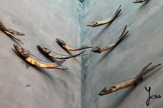 Photo: Como pez en el agua.