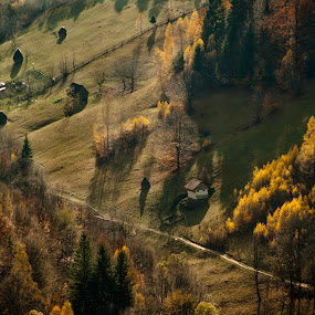 In the shade by Iulia Georgescu - Nature Up Close Trees & Bushes ( wood, autumn, fall, track, traditional, forest, road, house, yellow, shade )