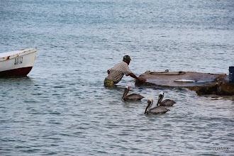 Photo: Pelícanos aguardan al pescador