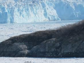 Photo: Seabird frenzy (foreground)