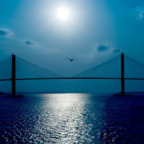 Sidney Lanier Bridge by Carlos Holt - Buildings & Architecture Bridges & Suspended Structures ( clouds, seagull, blue, night, bridge )