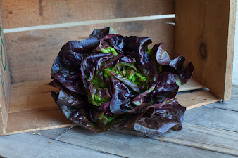 Photo of the share - Lettuce
