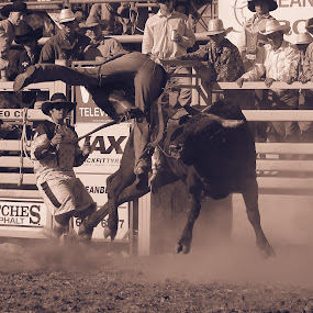 Oh no by Anthony Rutter - Sports & Fitness Rodeo/Bull Riding ( cowboy, ouch, rodeo, bull, bull riding )