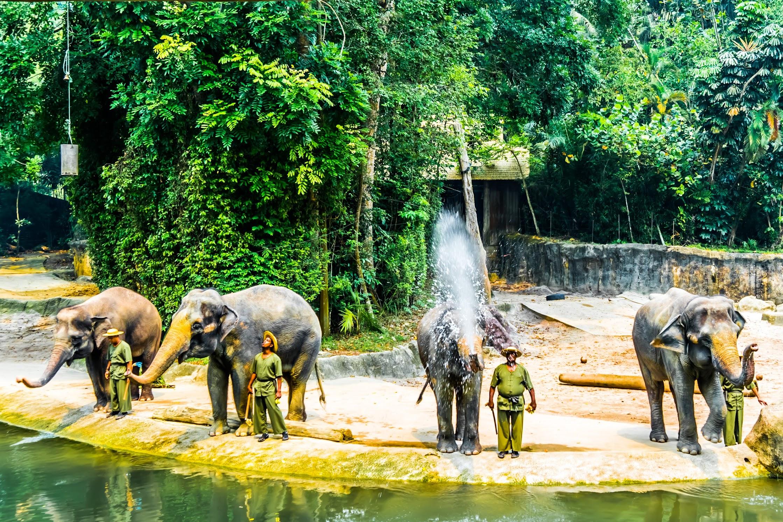 シンガポール動物園 ゾウ1