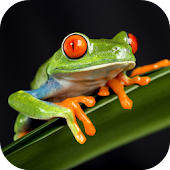 Frog Sounds Android APK Download Free By Leafgreen