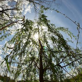 by Dorian Radu - Nature Up Close Trees & Bushes ( pwcskylines )
