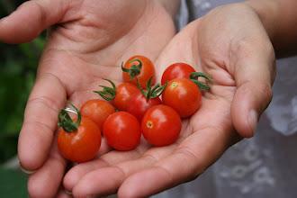 Photo: Tomatitos de la huerta