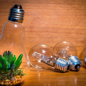 Green energy by Ovidiu Sova - Artistic Objects Other Objects ( nature, green, light, light bulb, energy,  )