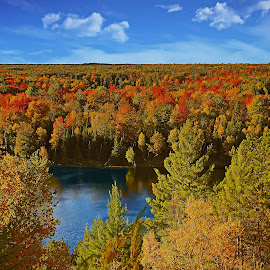 Autumn Colors by Bill Diller - Landscapes Forests ( forest, michigan, nature, au sable river, woods, tranquil, trees, peaceful, calm, calmness, tranquility, river, autumn )