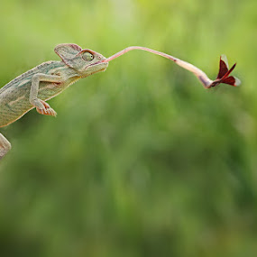 I got You by Shikhei Goh III - Animals Reptiles