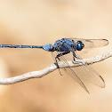 Libélula (Long skimmer)
