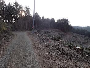 伐採地脇を通る