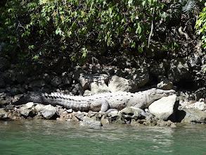 Photo: Další pohodovej krokodýl.