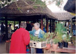 Photo: 2002 Sybil Meierhans, Herbs