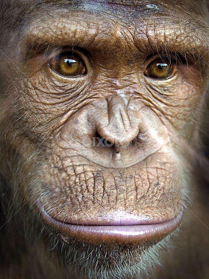 by Catherine McKinty - Animals Other Mammals ( face, people,  )