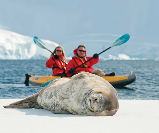 While kayaking on a Lindblad Expeditions trip to Antarctica, enjoy an up-close encounter with a crabeater seal.