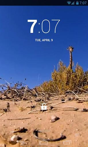 Giraffe Hidden Capture LiveWP
