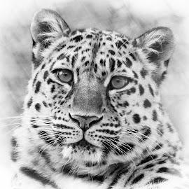 by Anngunn Dårflot - Black & White Animals