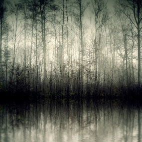 nebel by Markus Gann - Landscapes Forests ( bright, flow, cold, tree, nature, autumn, shadow, dark, germany, light, copy, wild, hill, orange, dream, grass, wallpaper, lake, forest, magic, season, trees, early, haze, warm, reflections, road, space, landscape, spring, mystic, fantasy, bavaria, grey, wet, alps, water, green, beautiful, morning, up, blue, fog, sunset, fall, outdoor, background, high, mist )