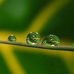 by Suhaimi Azzura - Abstract Water Drops & Splashes