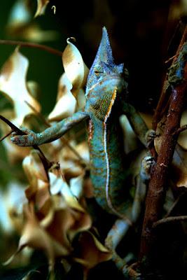 Camaleontico fra colori e ombra di nicolaibba
