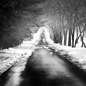 Drive Slow ...Ghosts at Play by Toni Geib - Black & White Landscapes ( long roads, creepy, winding road, snowy landscape, ohio, black and white, ghosts, snow, cemetery, dark, landscape, bare trees )