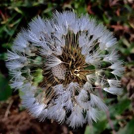 Glistening  by Debbie Squier-Bernst - Nature Up Close Natural Waterdrops (  )