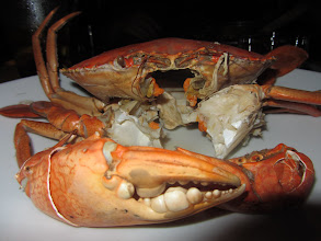 Photo: Reeeeeally large crab in Colombo.
