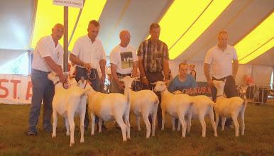 Photo: Rubriek 6: witte lammeren geboren tussen 10-2 en 11-3-2012.  1a. Marijke 200; 1b. Maisy 33; 1c. Lana; 1d. Maisy 35; 2a. Alba's Mariola 10; 2b. Ylse van 't Mudehof.