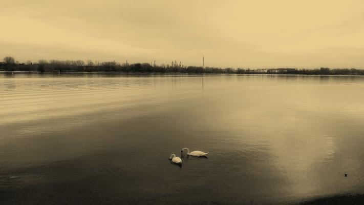 La quiete del lago.. di pattylane
