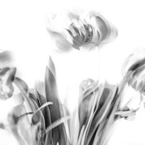 tulips b&w.jpg