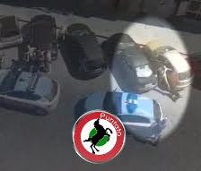 L'uccisione del pitbull a Napoli